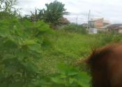 Excelente terreno em Itapoá SC