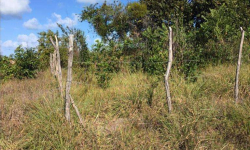 Terreno à venda, 1.100m²