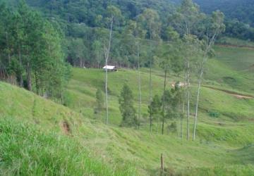 Sítio em São Pedro de Alcantara - SC - 20 hectares
